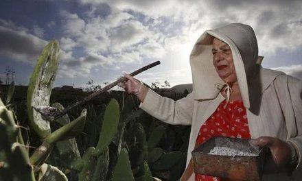 La Cochinilla en Canarias