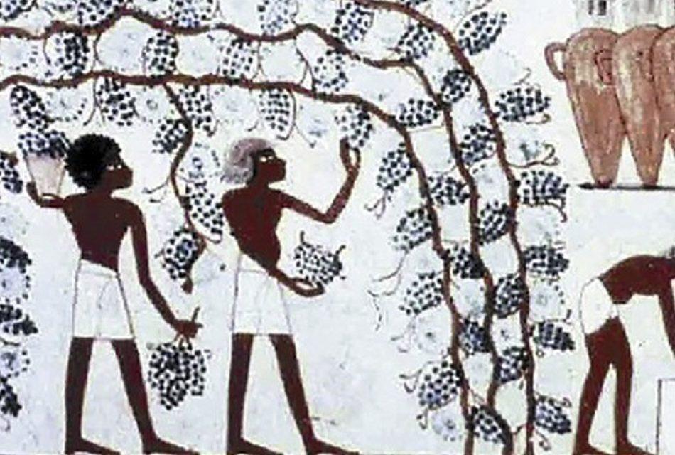 Desnudando el vino