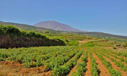EL PAISAJE AGRARIO DE TENERIFE Y SU POTENCIAL TURÍSTICO