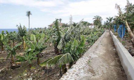 RUTA ENTRE LAS PLATANERAS Y EL ESPACIO DEL AGUA DE TENERIFE